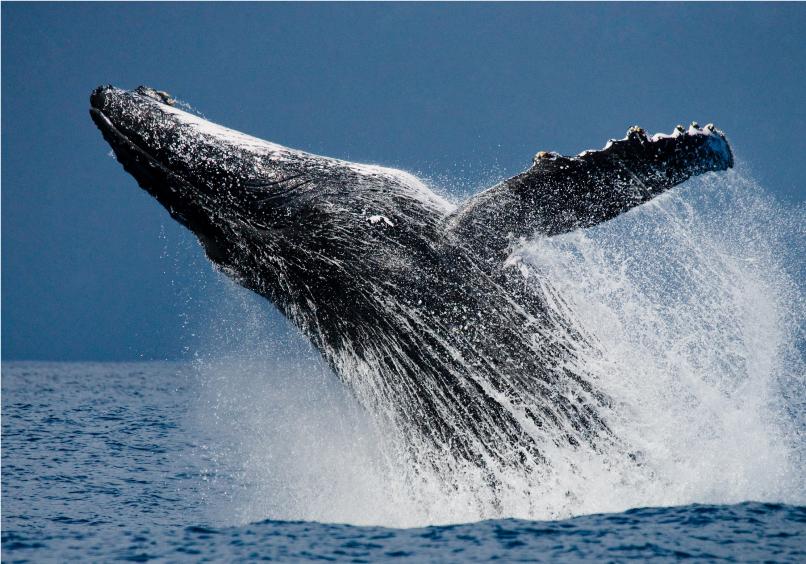 whale-photo